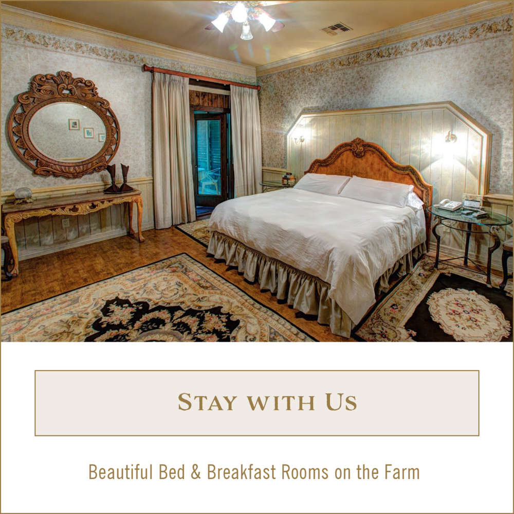 B&B escape and rooms for rent