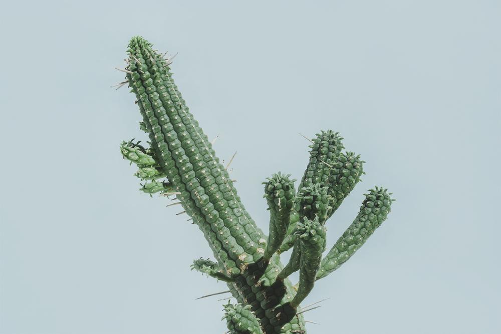 Green Cactus.jpg