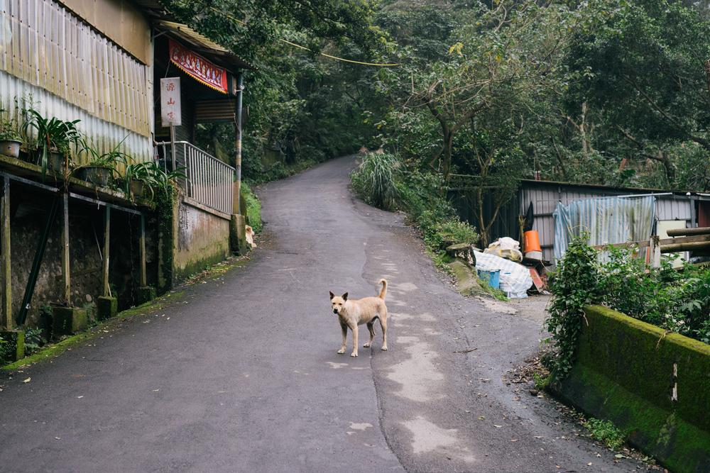 0093-Taiwan__DSC4515.JPG