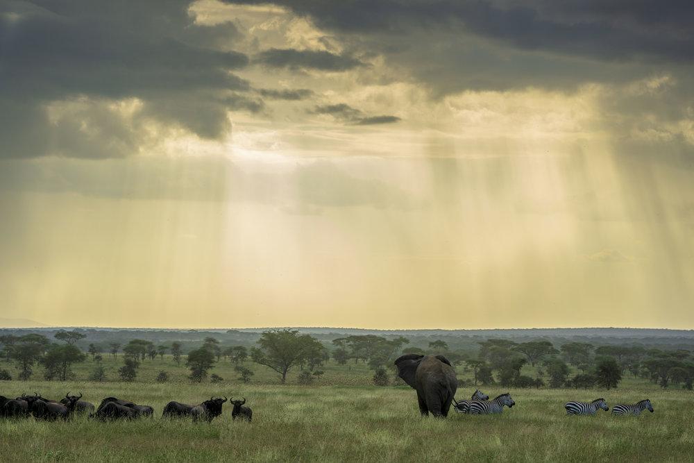 Serengeti (37 sur 65).jpg