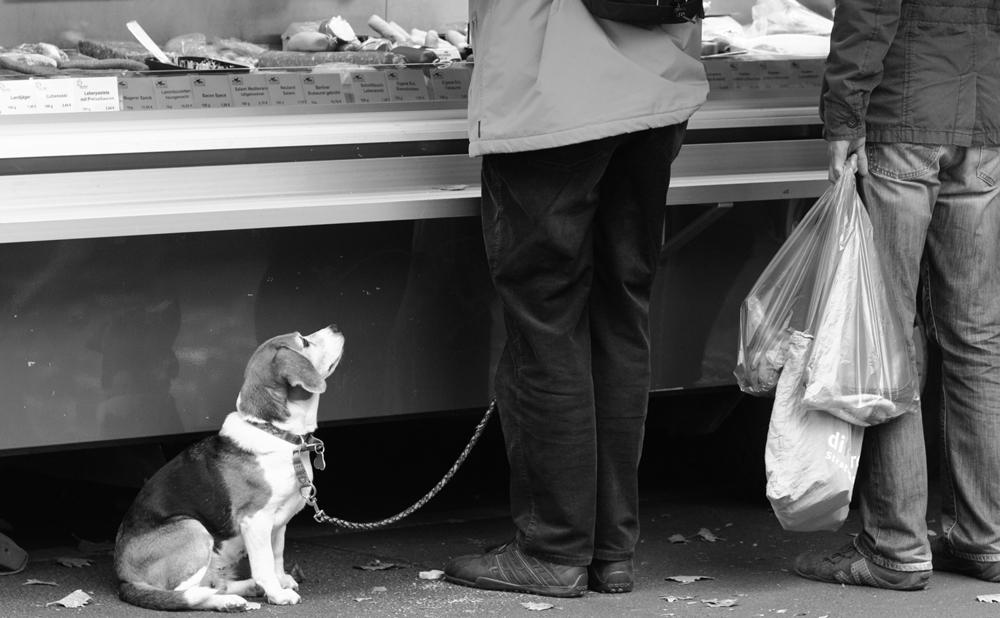 Every good beagle deserves fabulous links!