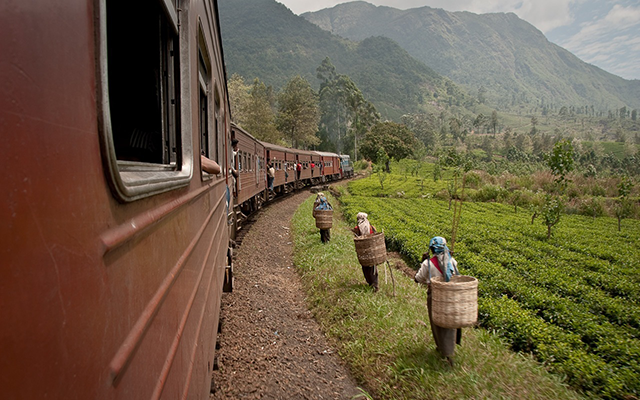 Train Ride through a Tea Plantation
