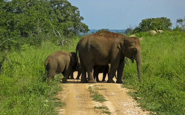 Elephant Crossing during SAFARI