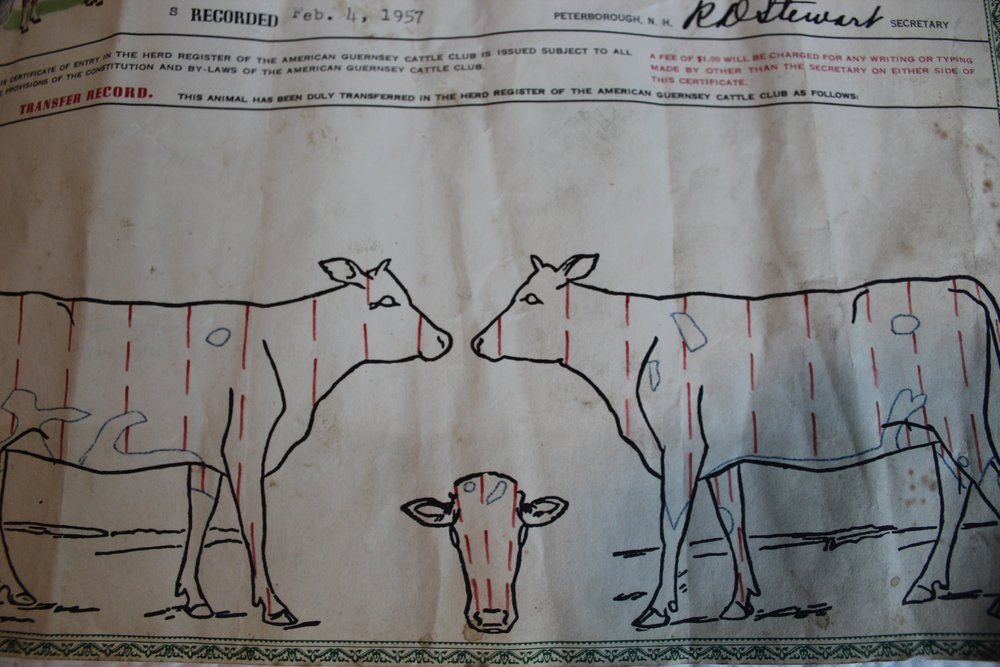 Herd register papers found in our barn for the dairy cow Becky, who once lived on the Farmette. My puppet is named after her paternal grand dam, Clearland Butterfat Charity.