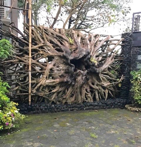 Teak Root fence