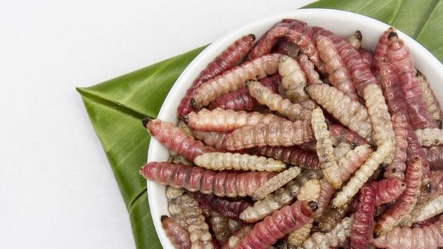¿por qué los niños de diferentes culturas se alimentan de una amplia variedad de alimentos?