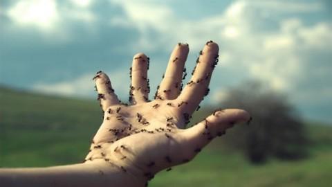 algunos consumidores crónicos de cocaína han reportado la sensación de que hay hormigas caminando debajo de su piel