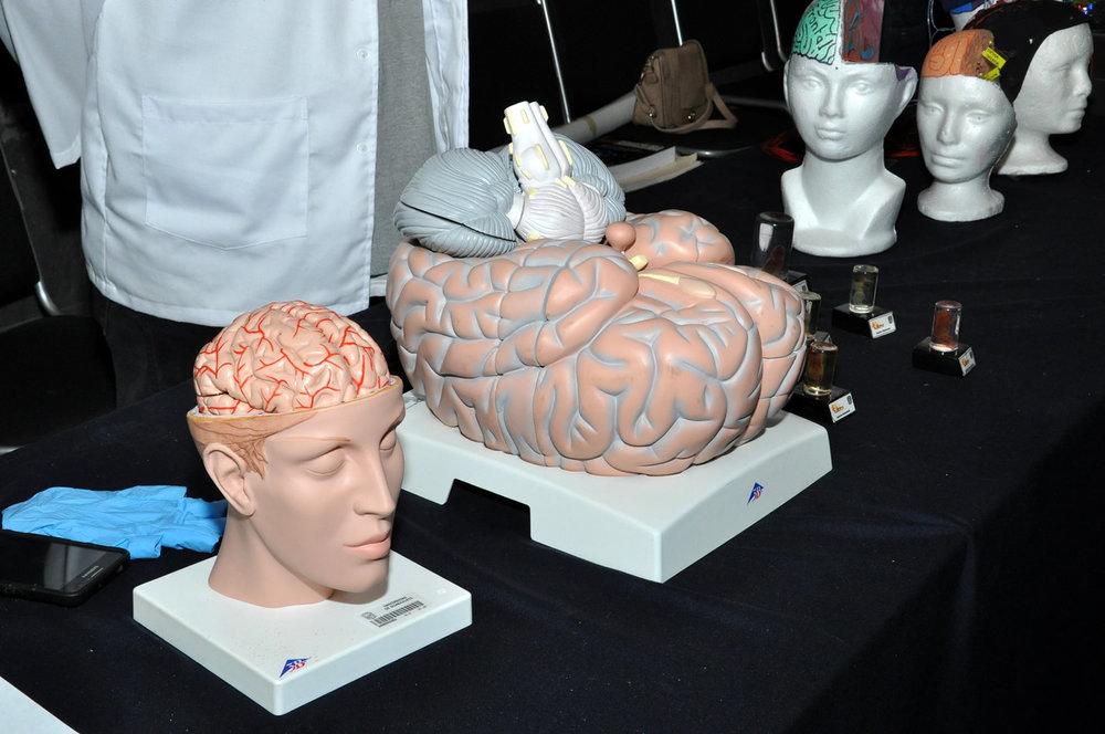 semana-internacional-cerebro-leon- 3 universidad-guanajuato-ug-ugto-4.jpg