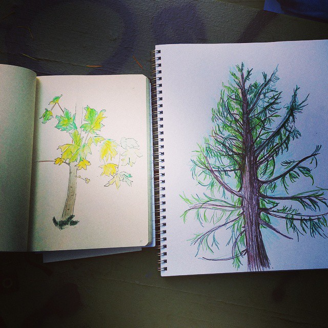 Bernard and I went to Mt. Tabor last weekend to draw trees.