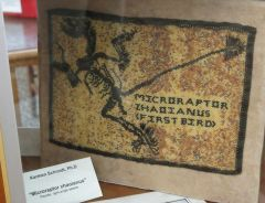 Copy of Microraptor Zhaoianus