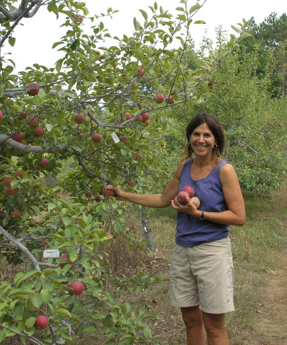 Linda Hoffman Picking Apples.jpg