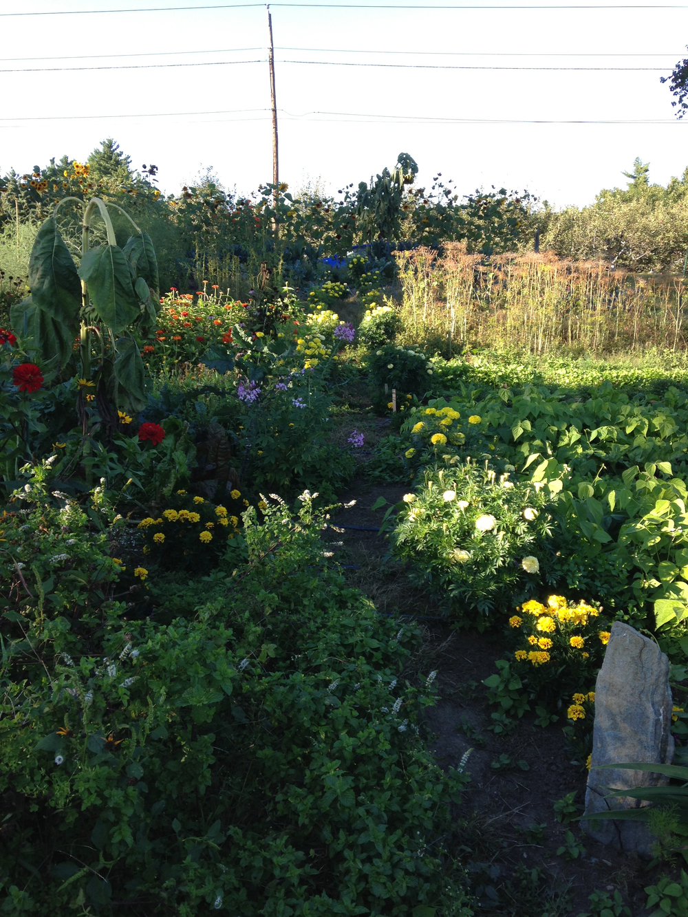 OFPF mid Sept garden.jpg
