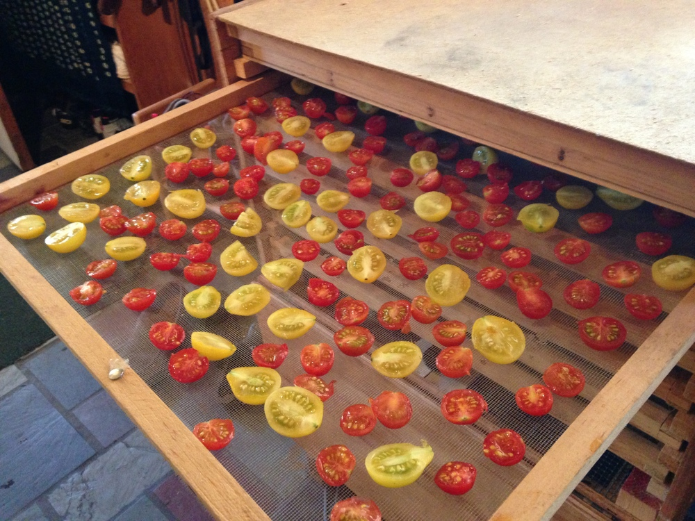 drying cherry tomatos.jpg