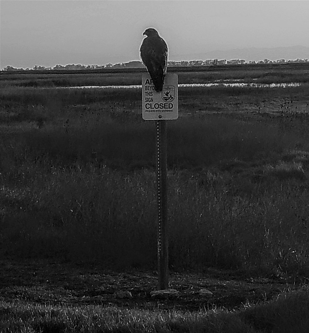 Mending the River Valley: Sacramento National Wildlife Refuge  Photo Credit: Autumn Beveridge, December 2016