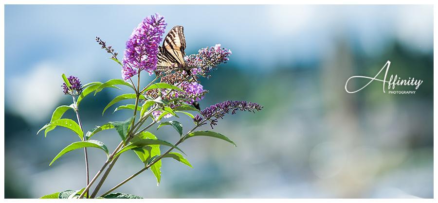 15-butterfly-fairview-park.jpg