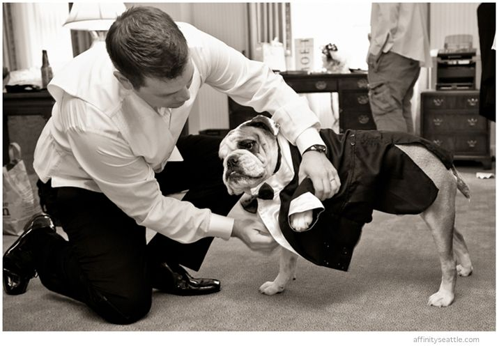 12-getting-dog-dressed-for-wedding-bulldog.jpg