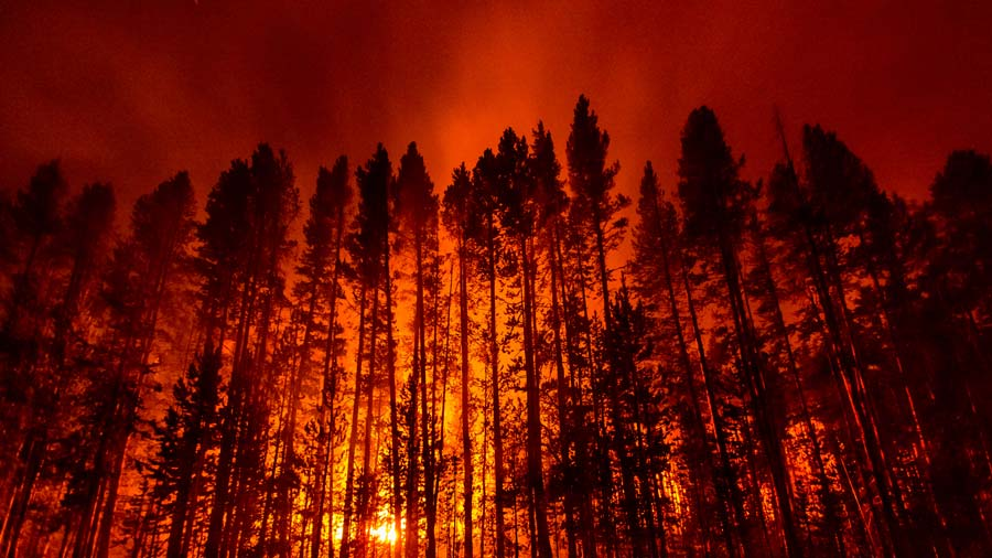 norris-fire-yellowstone-2012.jpg