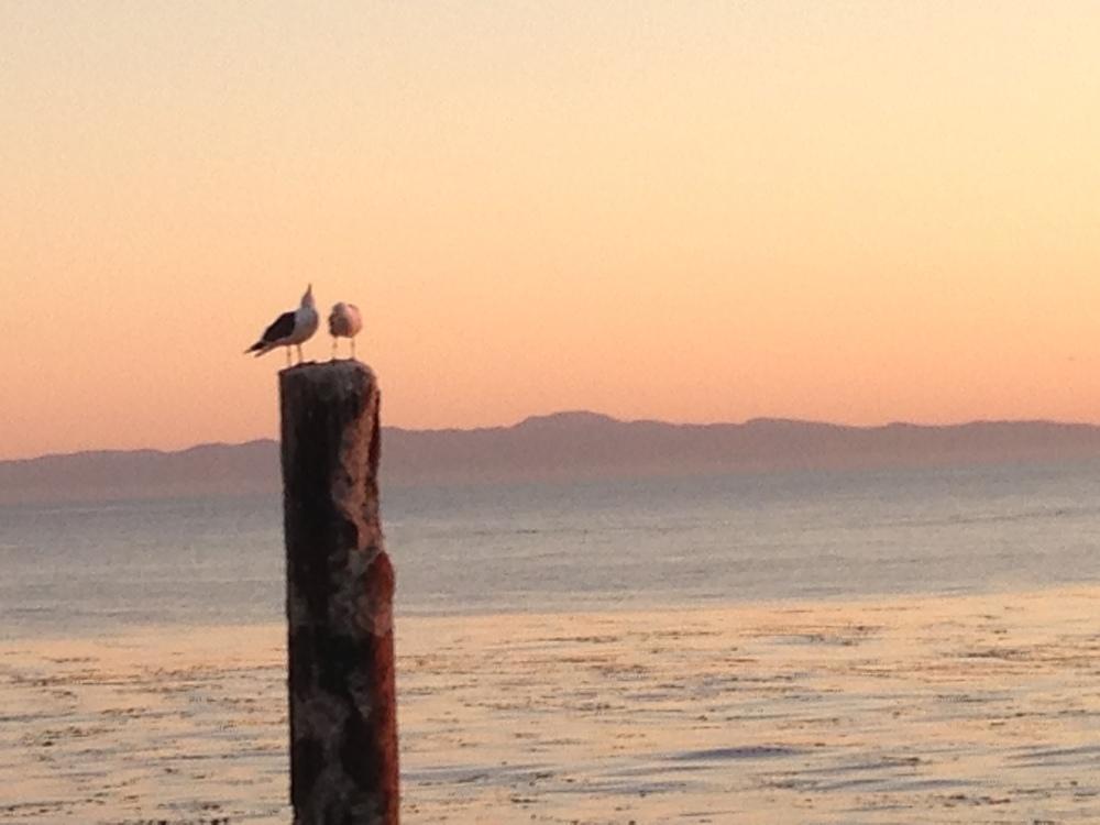 2_seagulls.JPG