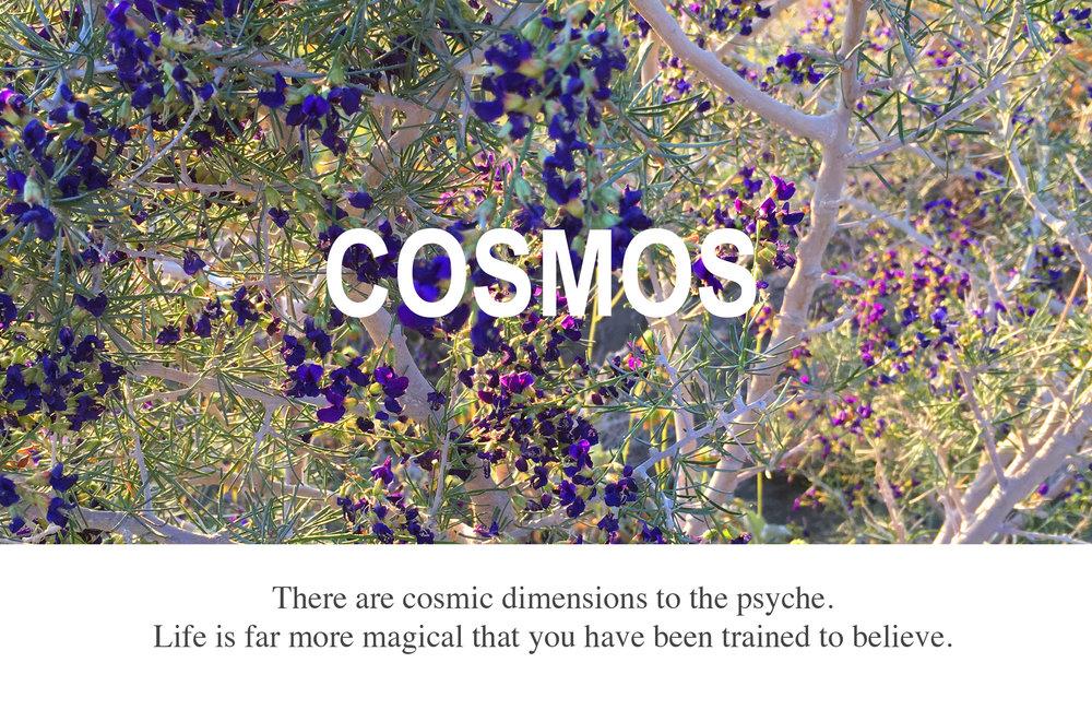 Cosmos_crop.jpg