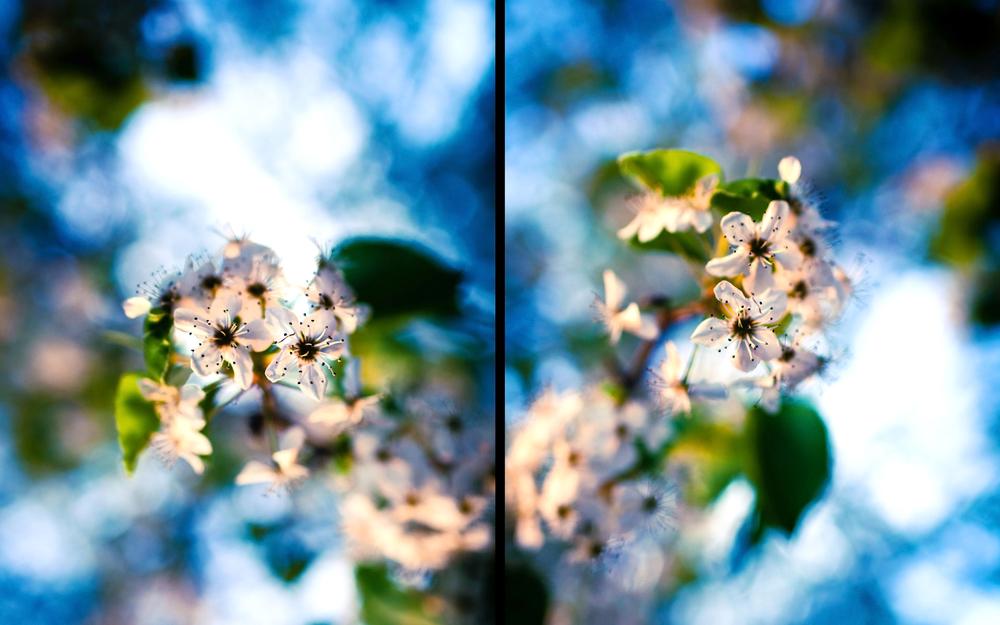 flowerssunset.jpg