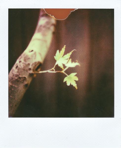 Polaroidsbook 175.jpg