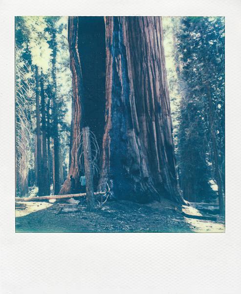 sequianationalforest (1 of 2).jpg
