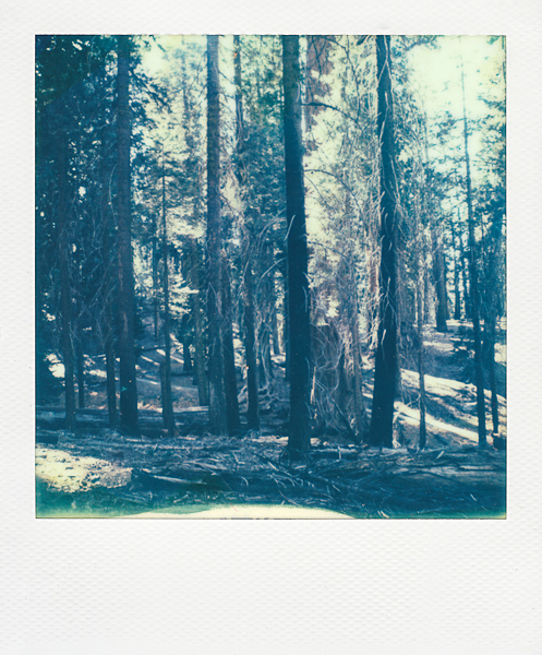 sequianationalforest (2 of 2).jpg