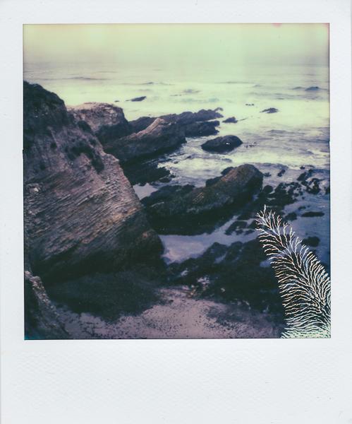 Polaroidsbook 5.jpg
