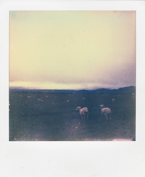 Polaroidsbook 19.jpg
