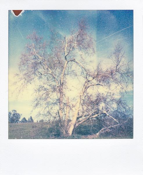 Polaroidsbook 23.jpg