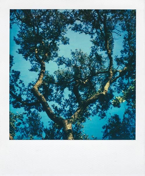 Polaroidsbook 22.jpg