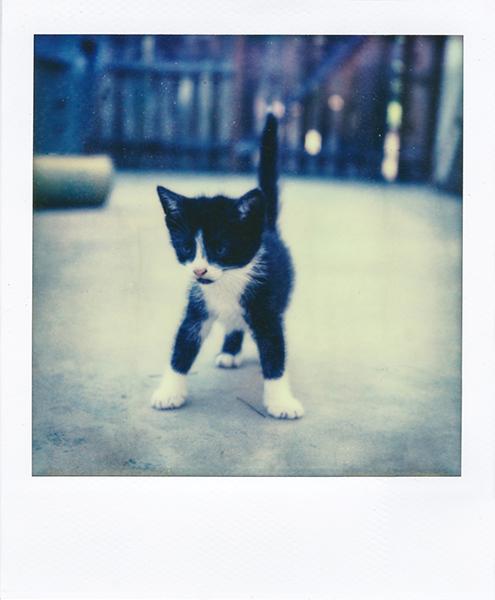 Polaroidsbook 118.jpg