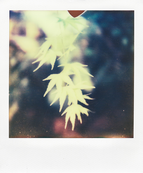 Polaroidsbook 130.jpg