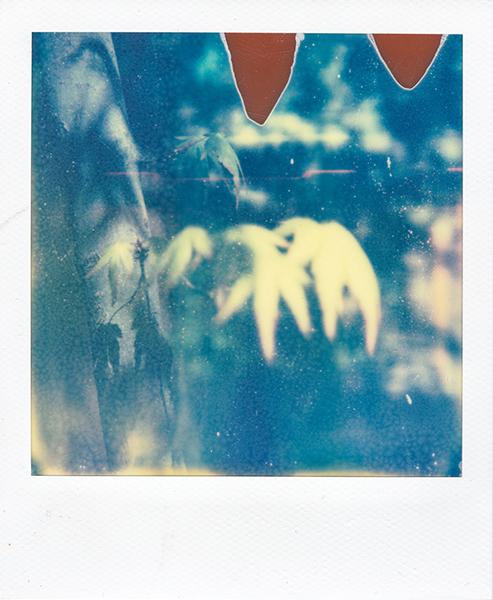 Polaroidsbook 131.jpg