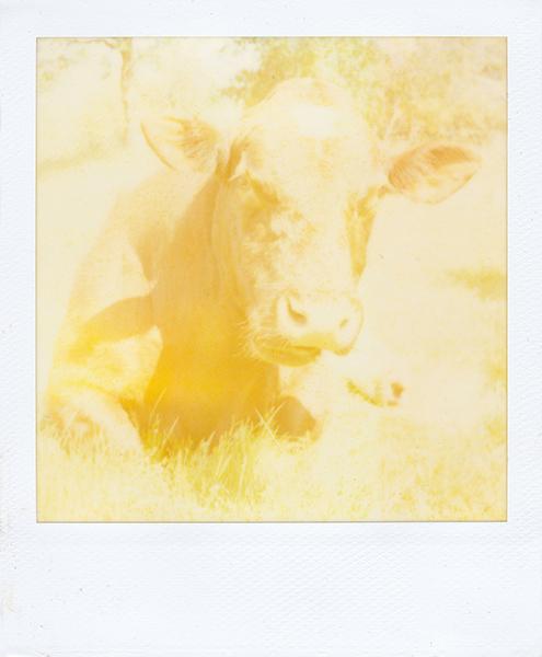 Polaroidsbook 384.jpg