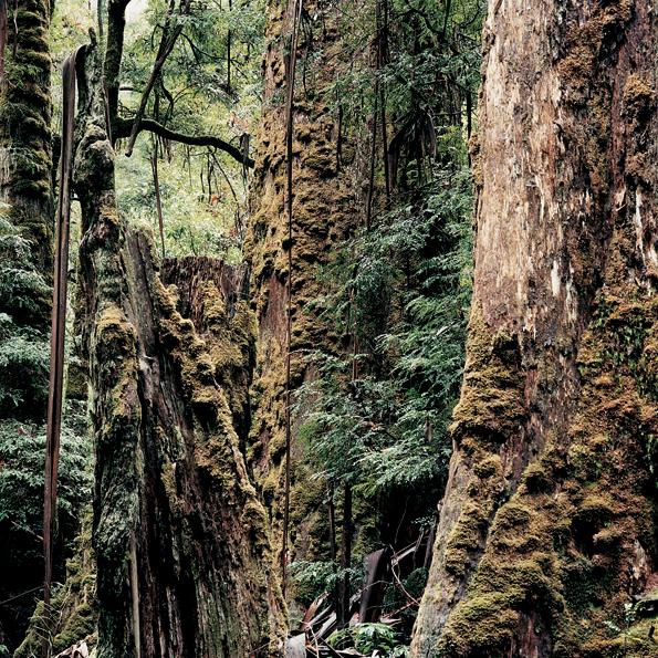 Forest, AU04.jpg