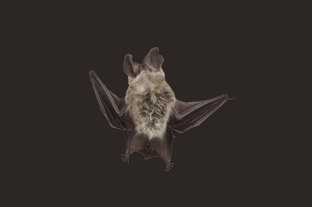 Bat_IMG_0252.jpg