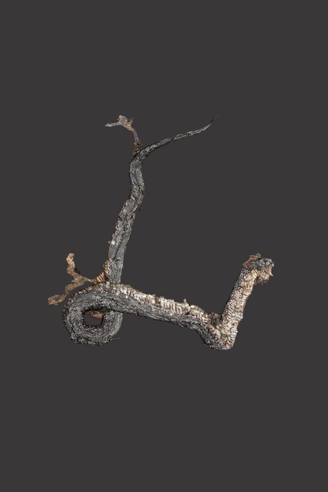 redbelliedblacksnake.jpg