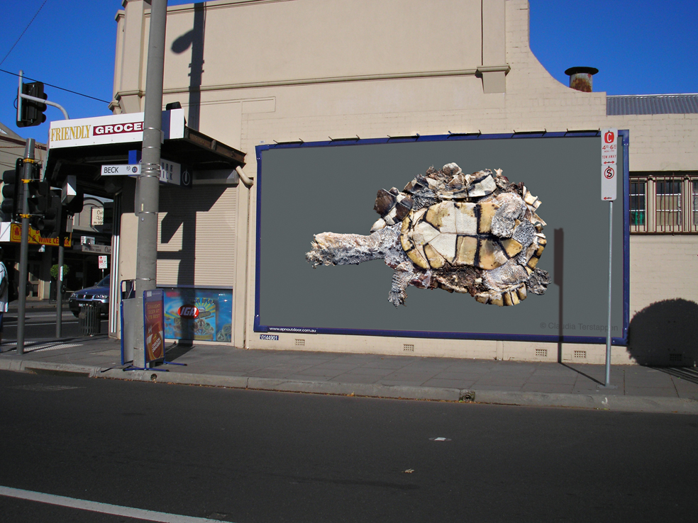 billboard, Long-Necked Turtle, Australia 2009