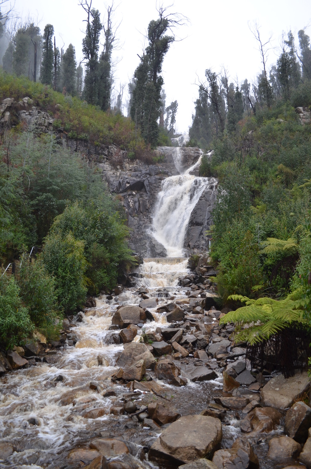 The famous Steavenson Falls - beautiful and serene.
