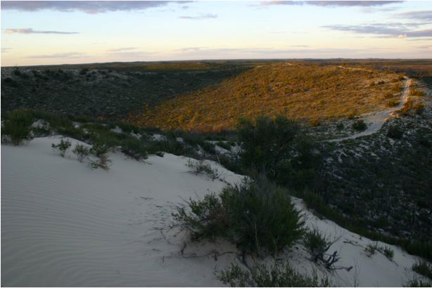 One of the Big Desert's many dunes. (Photo: Fred Sannen)