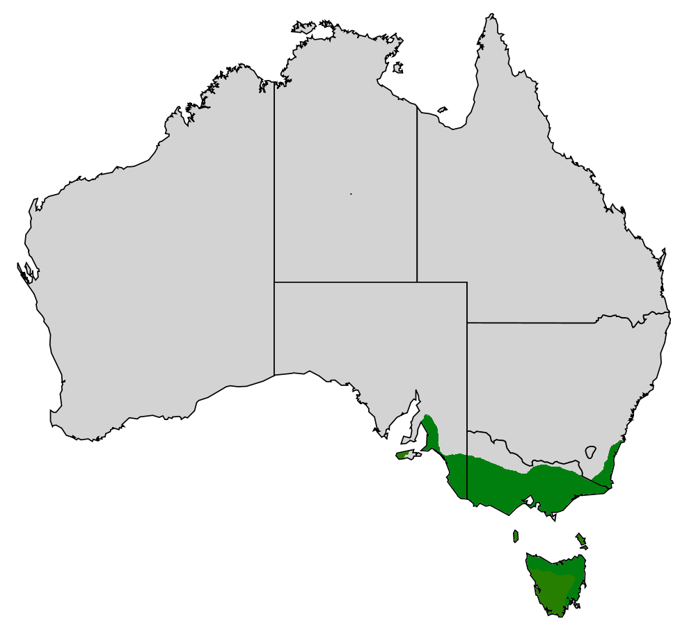 Range of the Common Heath. Image Credit:   http://en.wikipedia.org/wiki/Epacris_impressa
