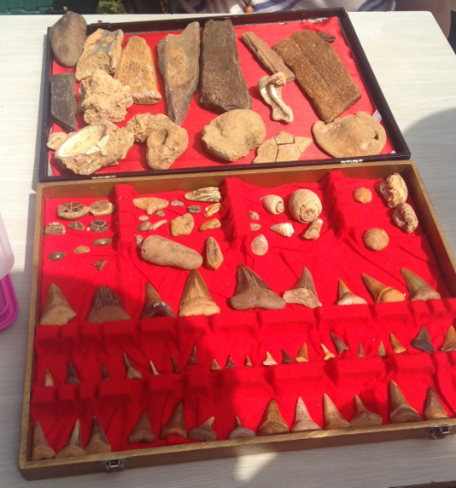 A box of wonders: a fossicker displays their own private collection.