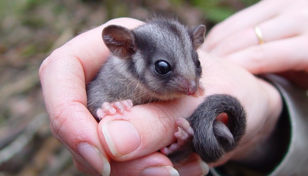 Image courtesy of http://www.actwild.org.au