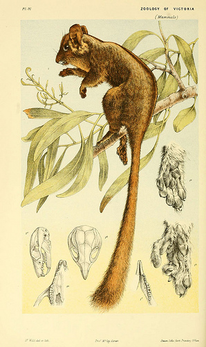 Image courtesy of the Biodiversity Heritage Library