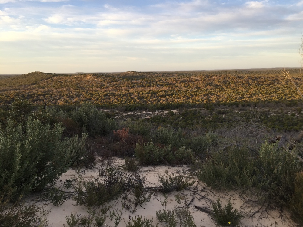 The rolling dunes and swales of the Wyperfeld National Park. Photo: Juliet Israel
