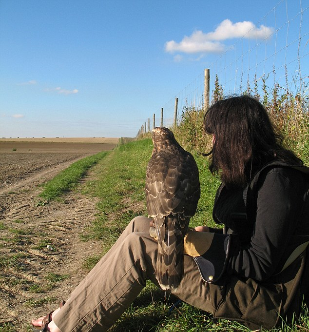 Macdonald with Mabel the goshawk.  Image: www.dailymail.co.uk