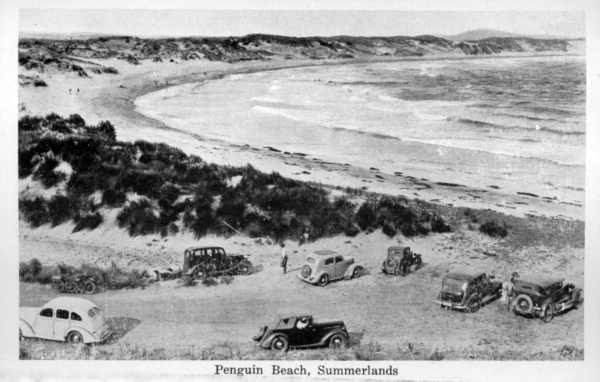 An early 20th Century photograph of 'Penguin Beach' on Phillip Island.  Image: State Library of Victoria