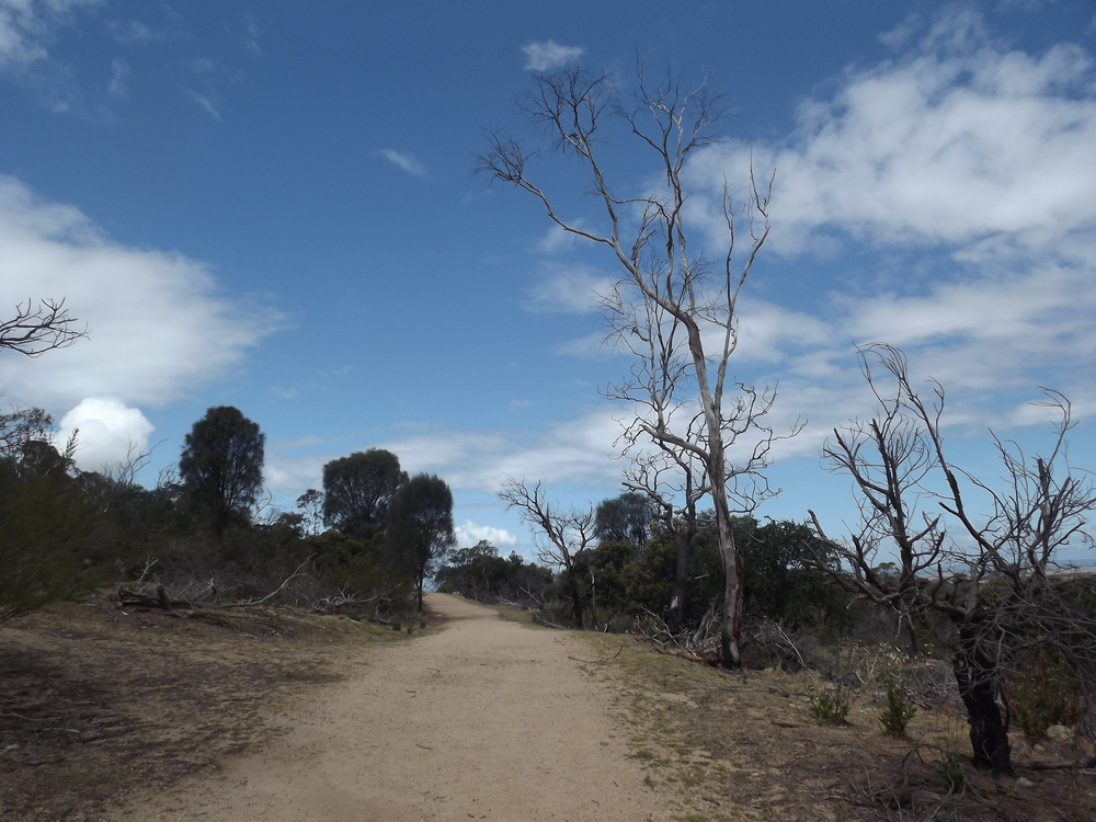 Looking along the Big Rock Track.  Image: Tanya Rajapakse