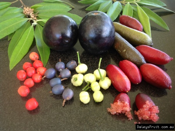 The edible fruits of an Australian native garden. Image: Daleys Fruit